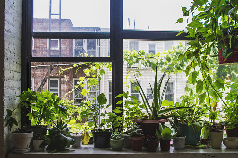 apartment-friendly plants