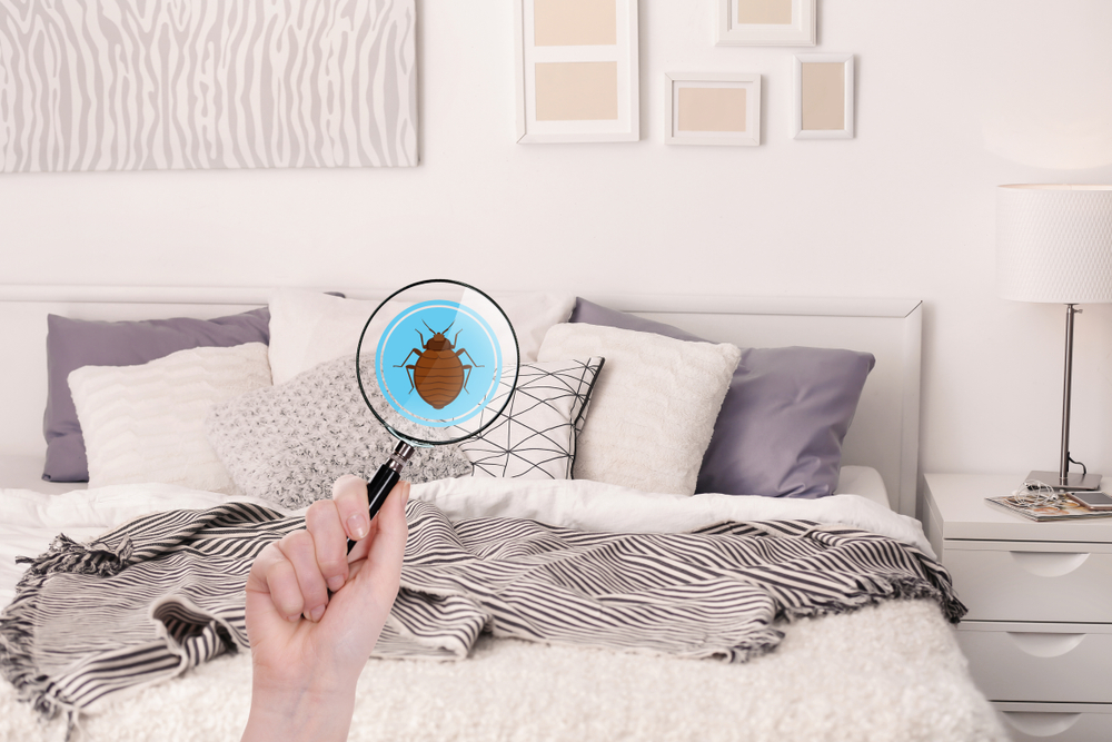 Woman with magnifying glass detecting bed bug
